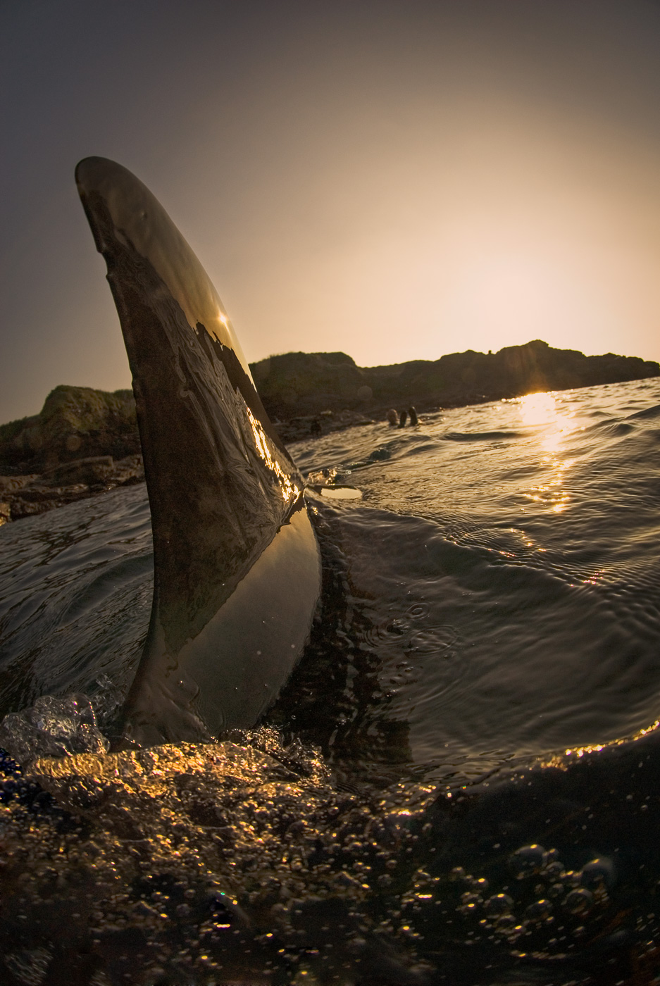 dolphin fin backlit