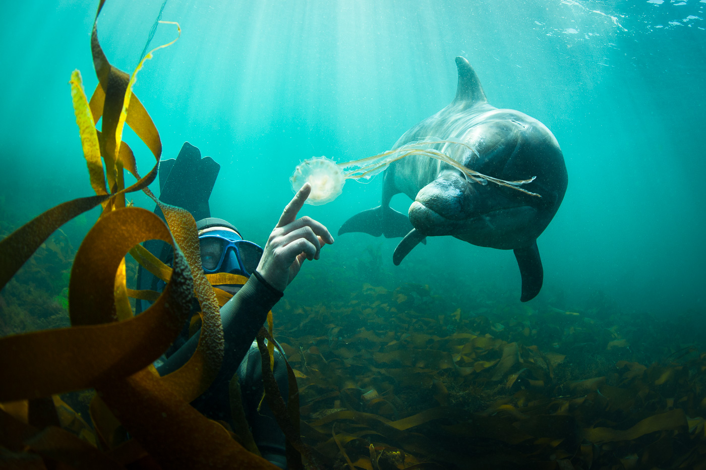 free diver with dolphin ireland