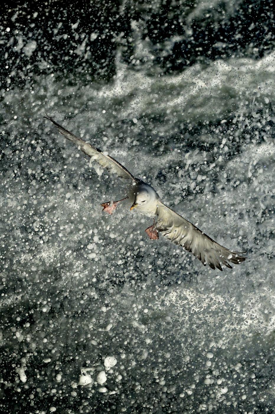 fulmer fighting against waves ireland
