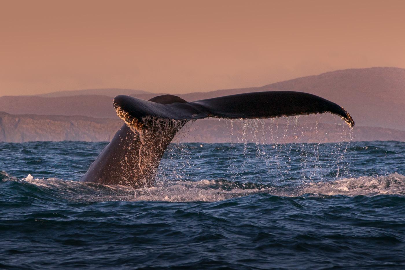 humpack whale cork tail ireland