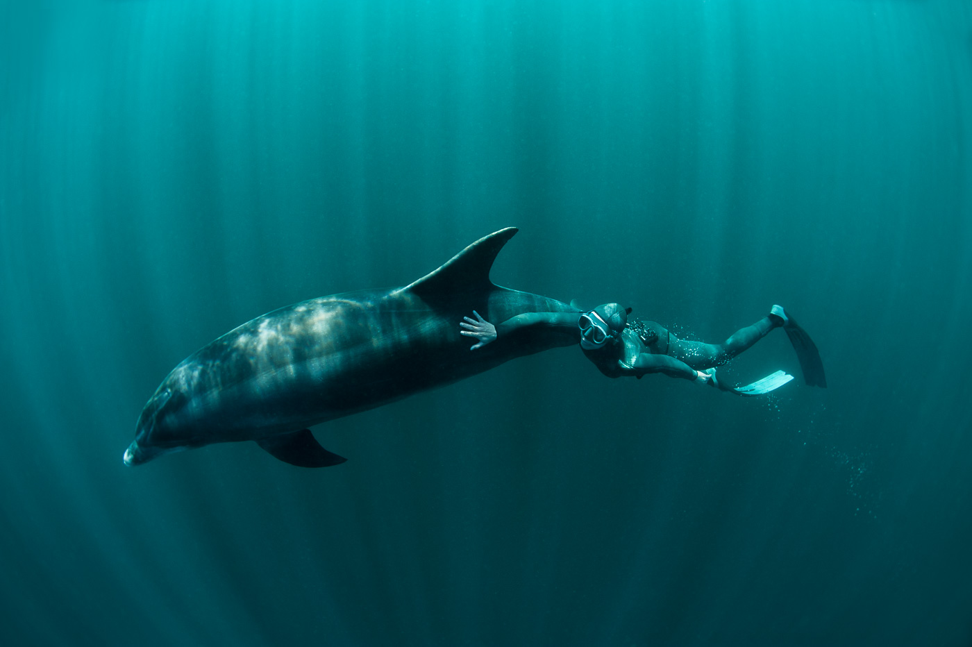marmaid and dolphin free diving ireland