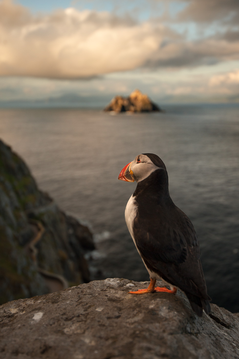 puffin skellig michael