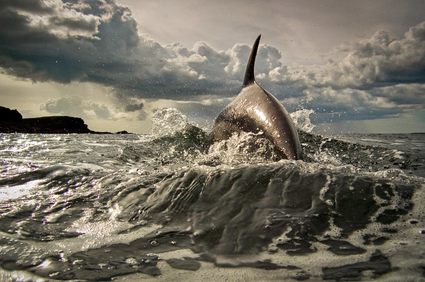 spectacular dolphin jump