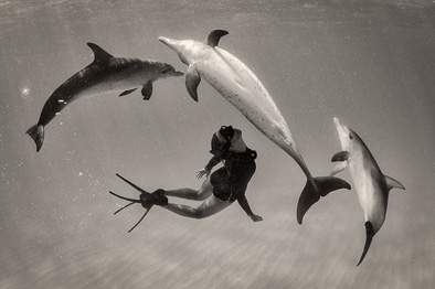 dances with dolphins
