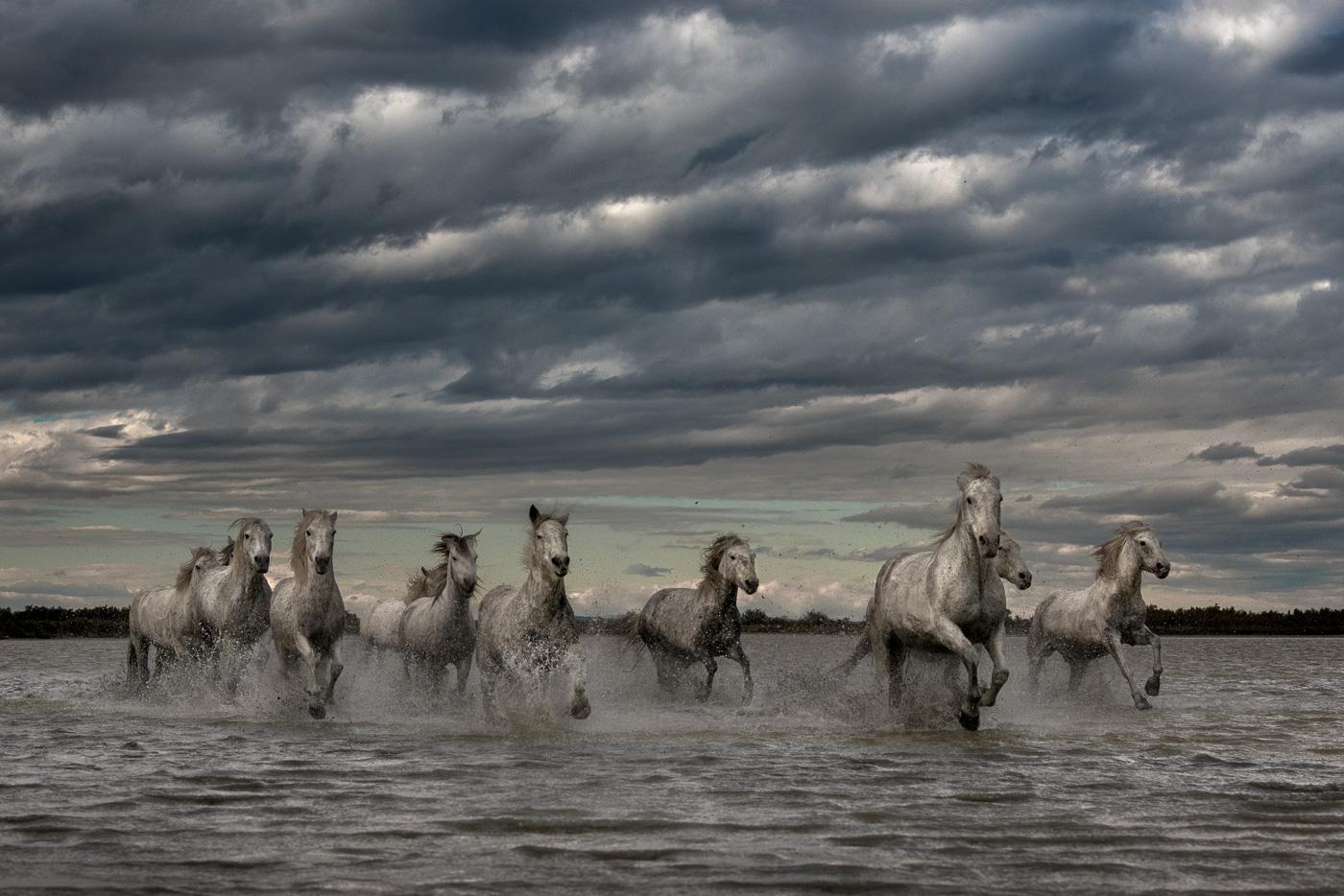 camargue horses dramatic sky