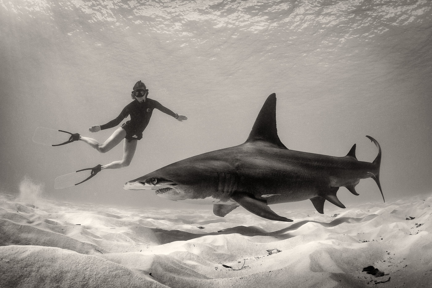 hammerhead shark with girl freediver black and white