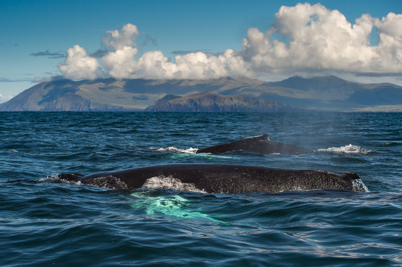 two humpback whales three sisters