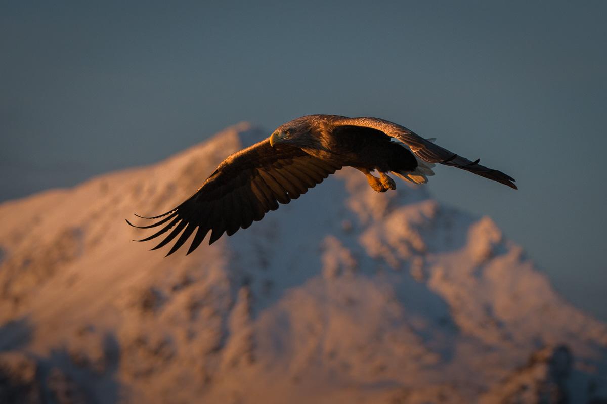 eagle white tail mountain