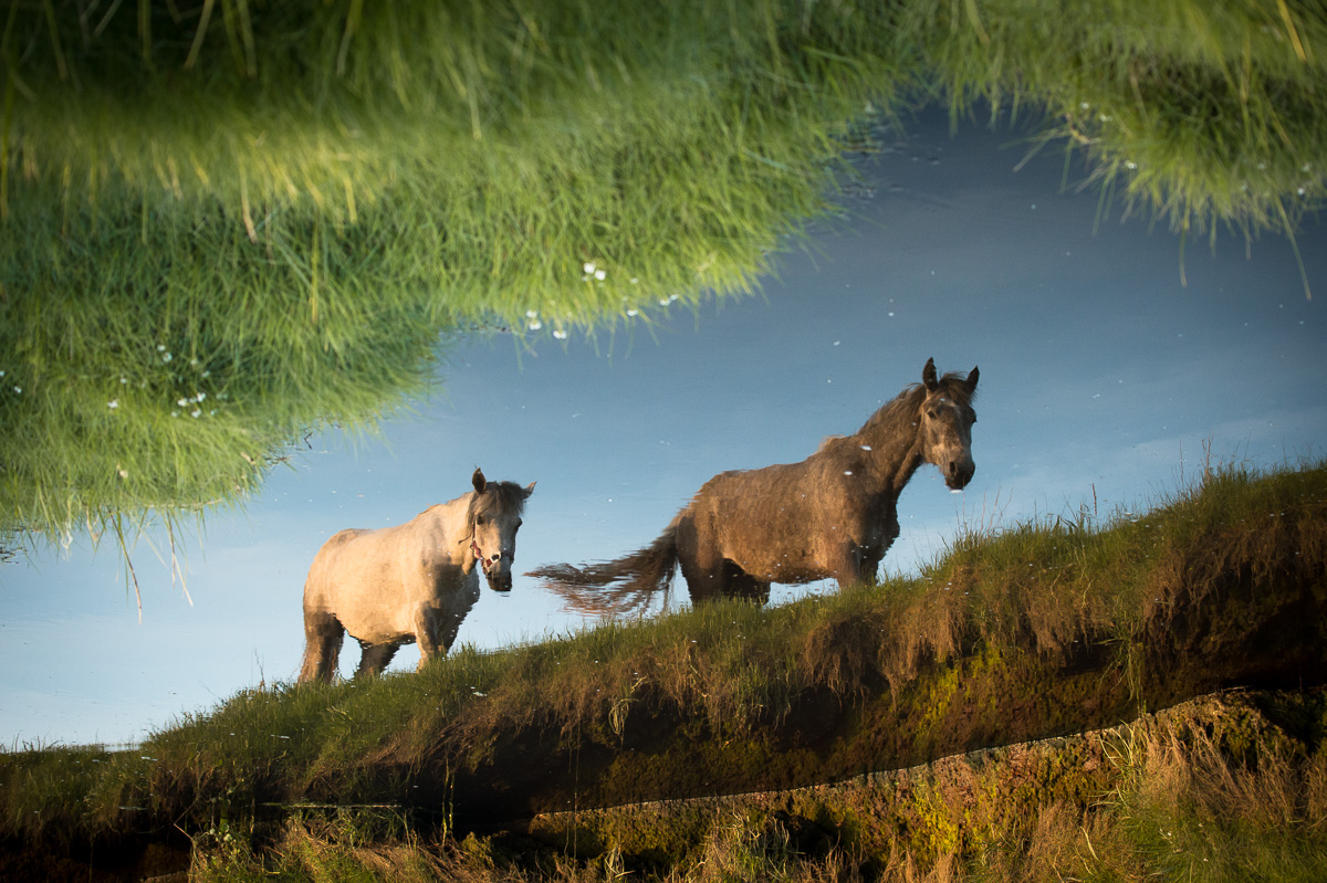 horse_reflection_in_river_ireland