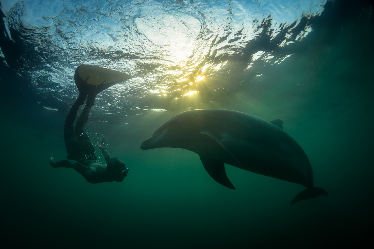 human and dolphin