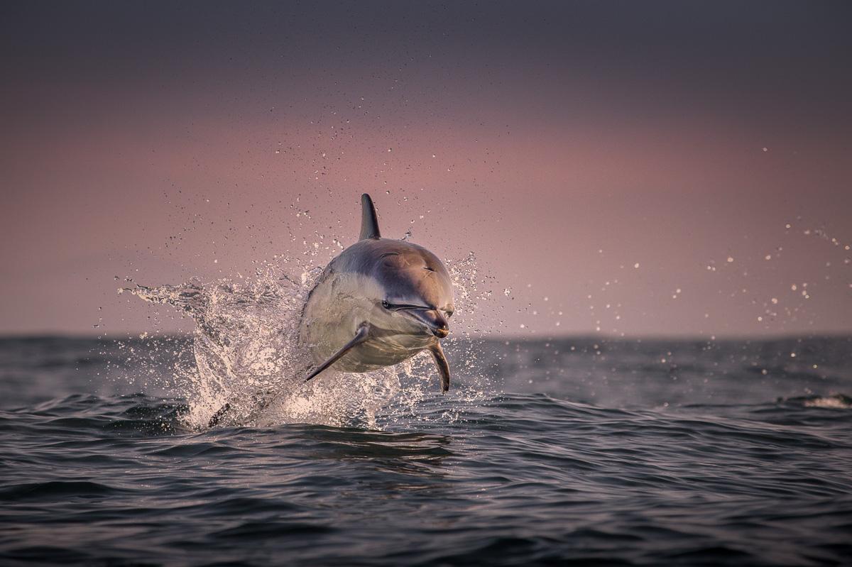 spirit of dolphins