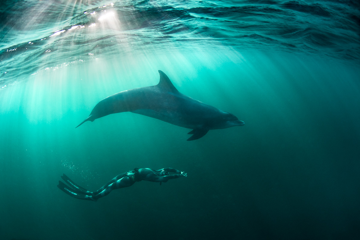 amazing diving with dolphins photos