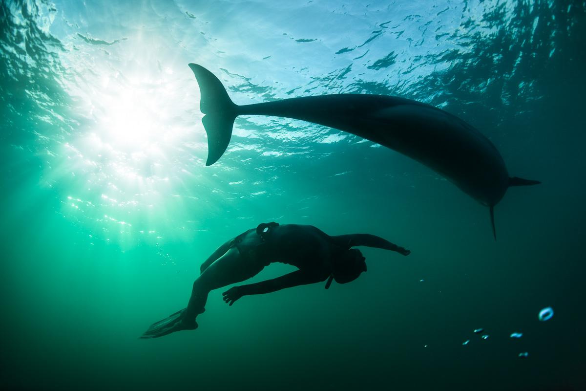 wild dolphin swim with people