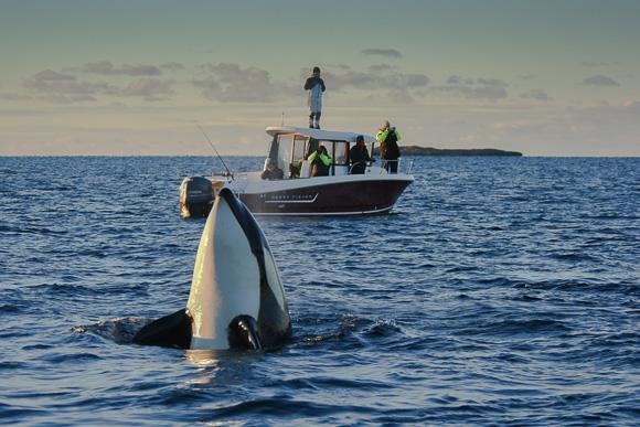 orca-camp-16-109-1-von-1