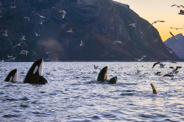 orca-camp-16-89-1-von-1