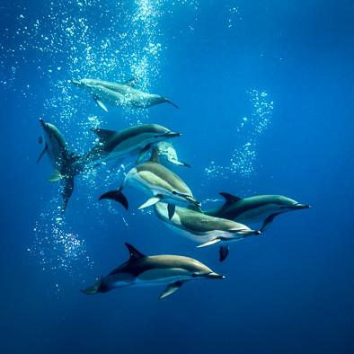 amazing beautiful underwater photos common dolphins