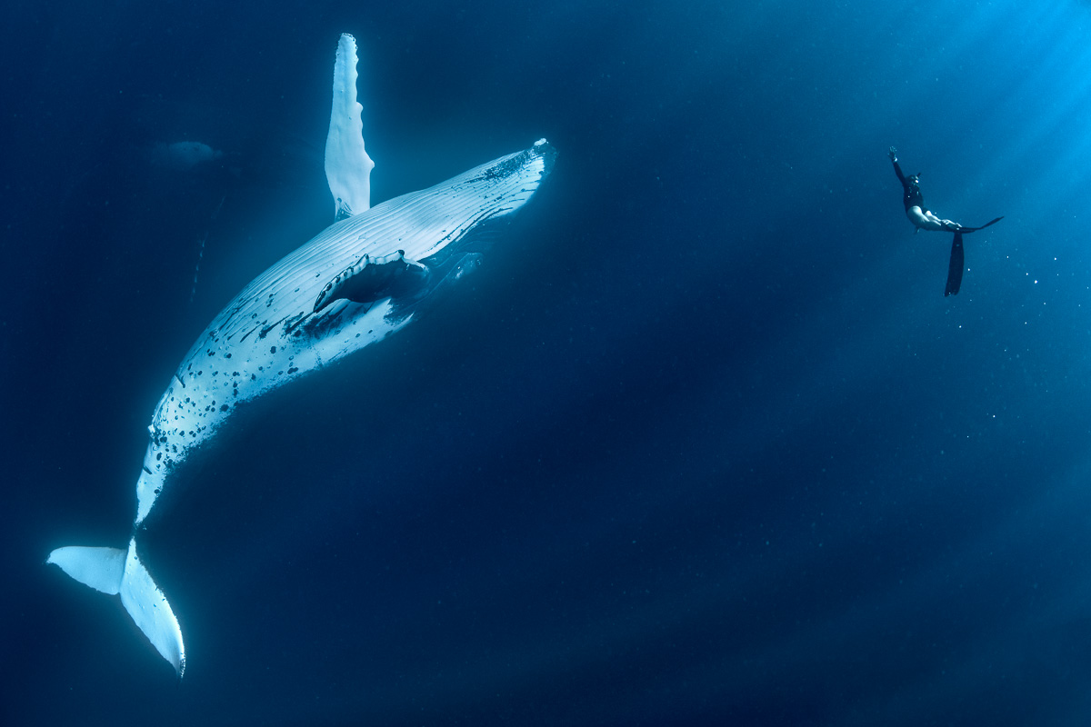 giant whale imitate human moves