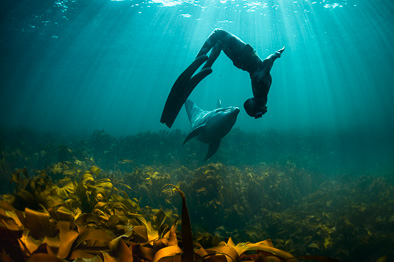 interaction human with wild dolphin underwater