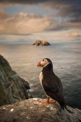 puffin at sunset Skellig view Michael