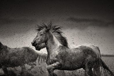 wild horse flying hair water