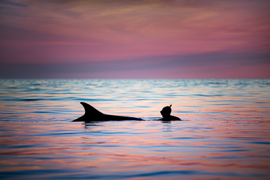 swimming with dolphins Ireland