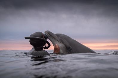 wild dolphin interaction dusty Ireland