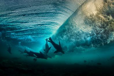 surfing_sealions_san_diego