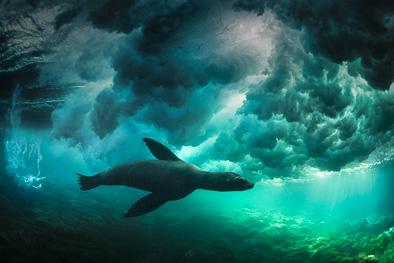 sealion_under_wave_clouds_underwater