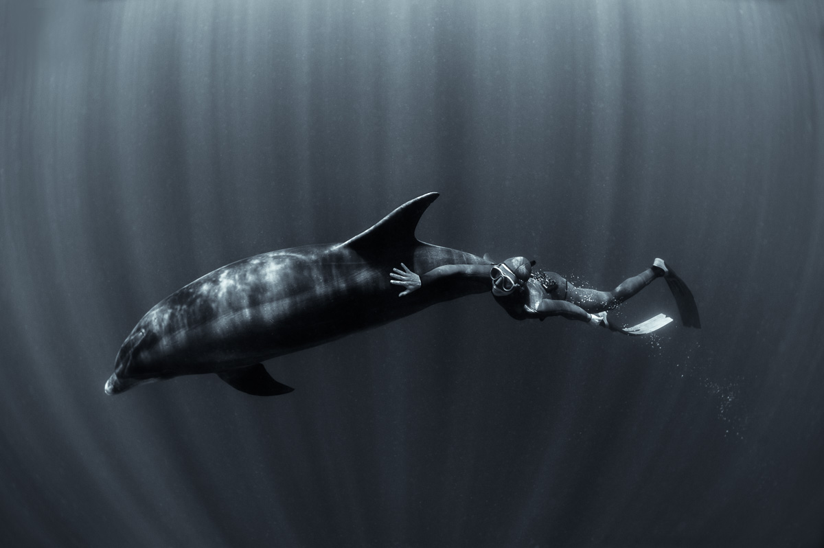 diving with dolphin black and white