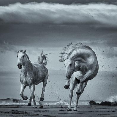 white wild horse on the beach