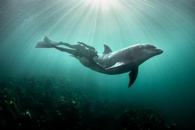 friendship with wild dolphin