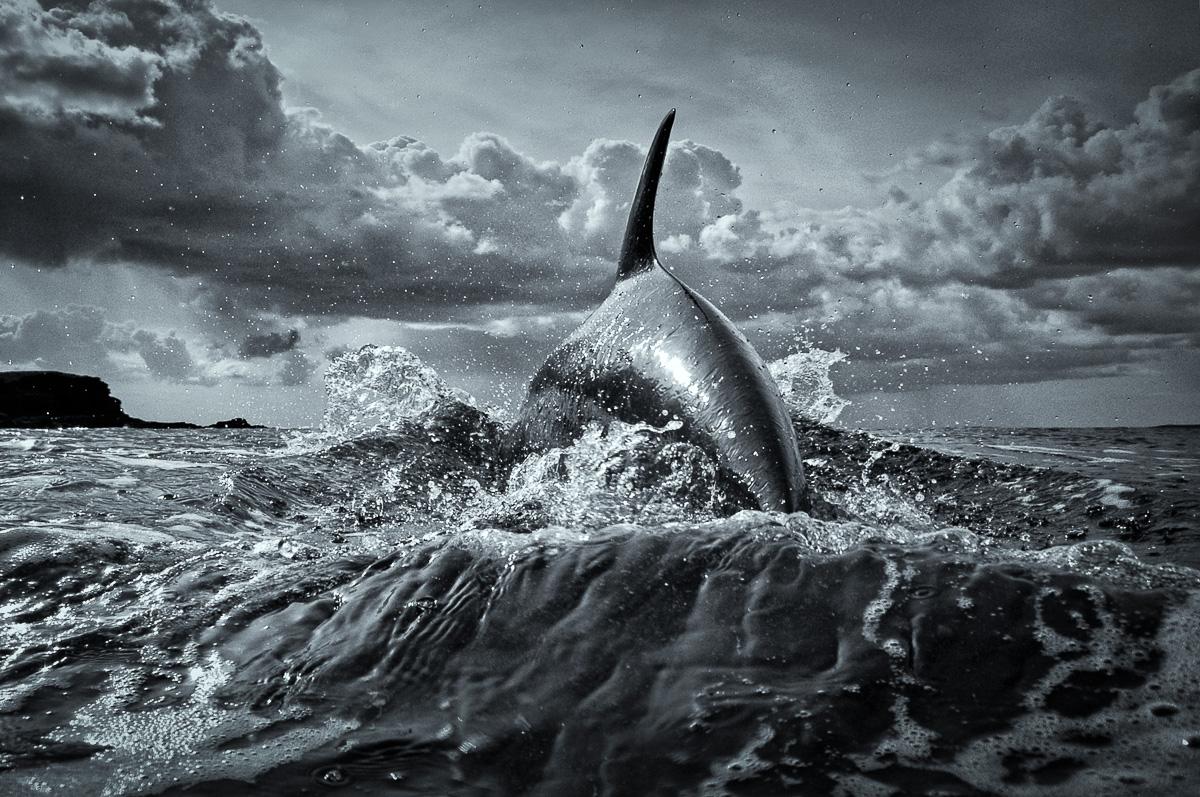 silver dolphin perfect body