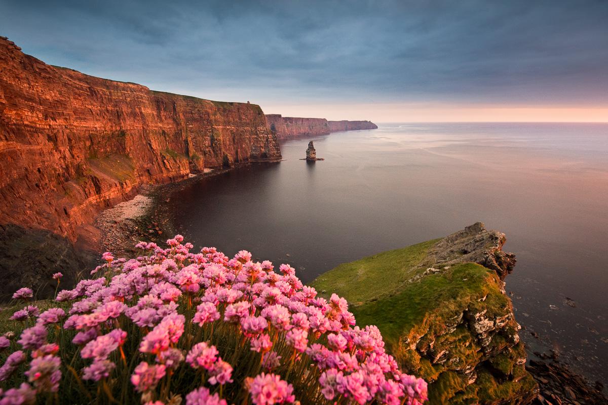 cliffs_of_moher_flower