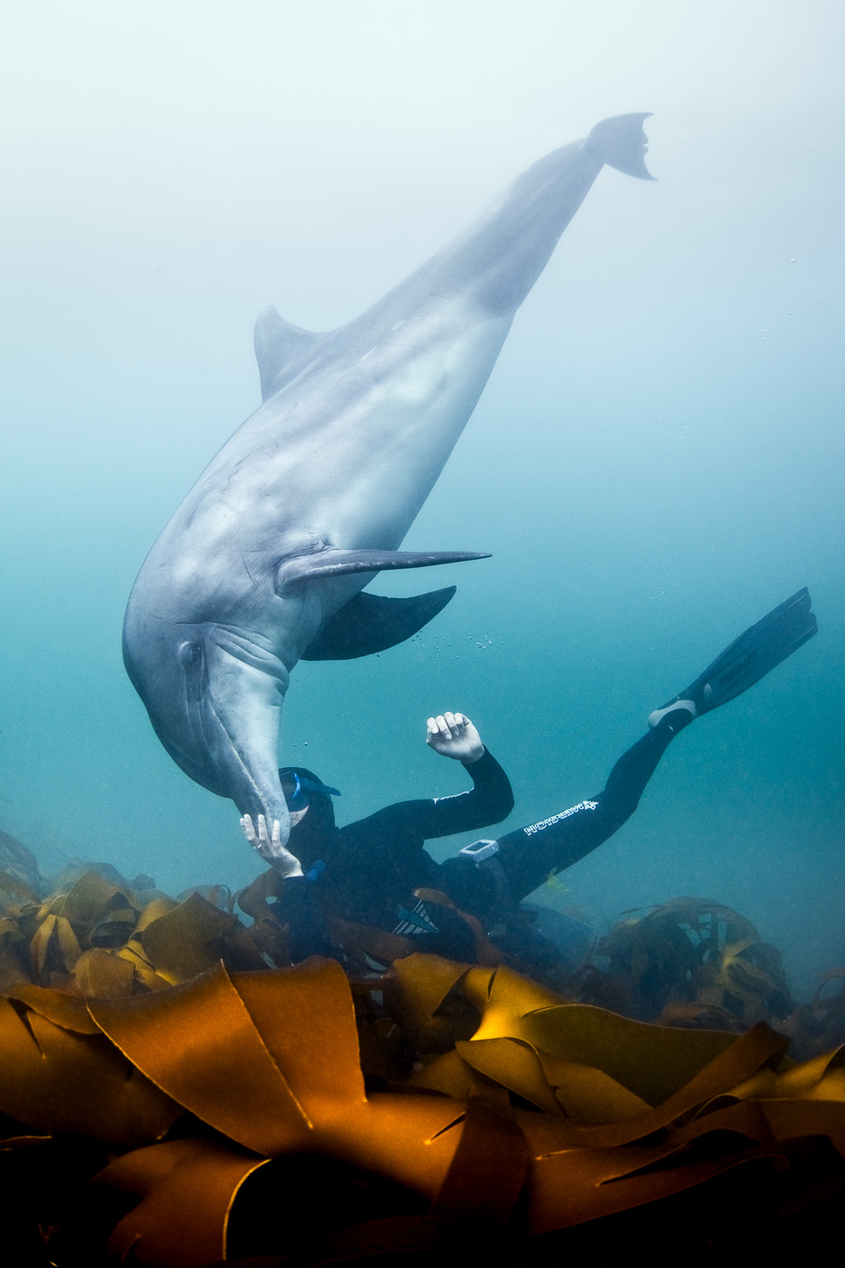 free_diving_with_dolphin_love