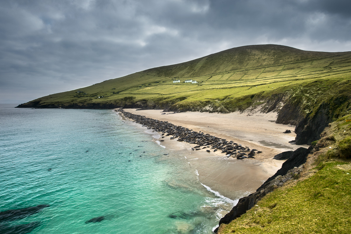 great_blasket_island_grey_seal_colony_ireland