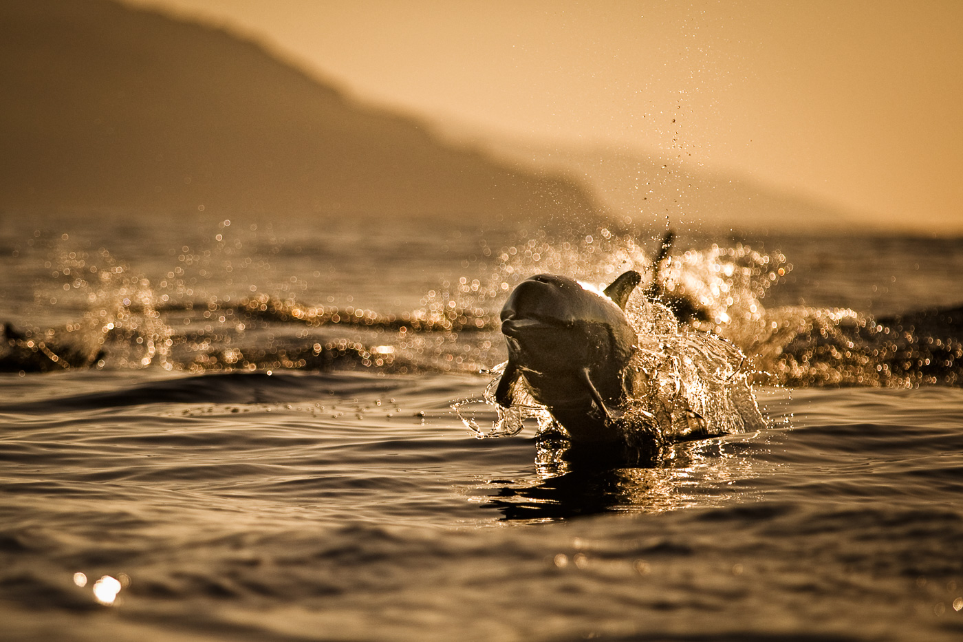 spotted_dolphin_backlit_jumping_azores