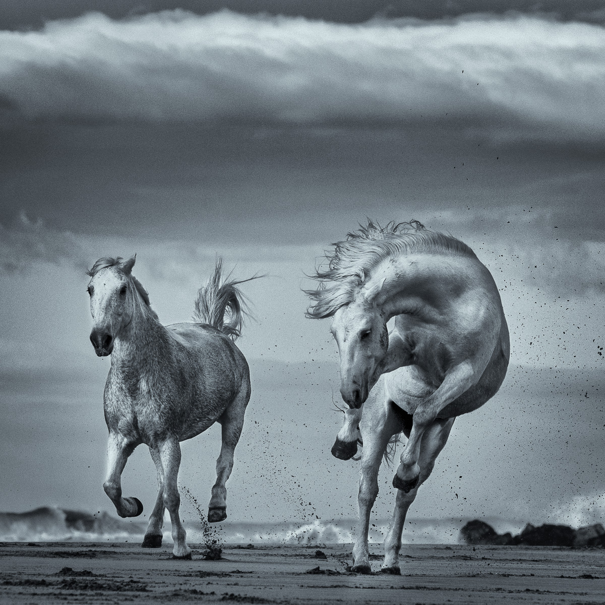 wild-camargue-horse-beach