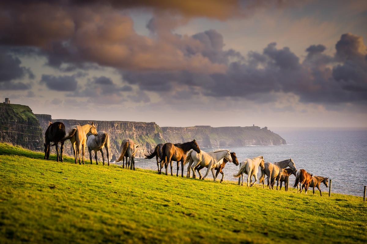 wild_atlantic_horses_cliffs_of_moher