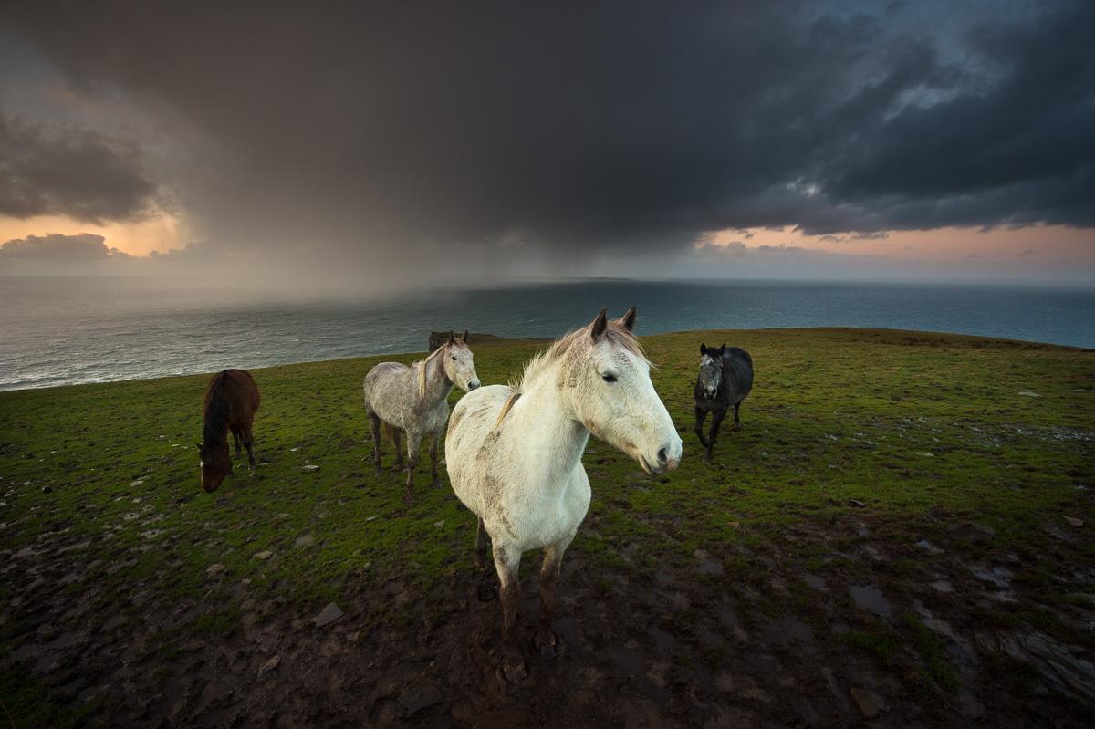 wild_atlantic_horses_storm_sky
