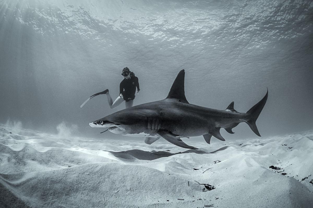 women-freedive-with-great-hammerhead-shark